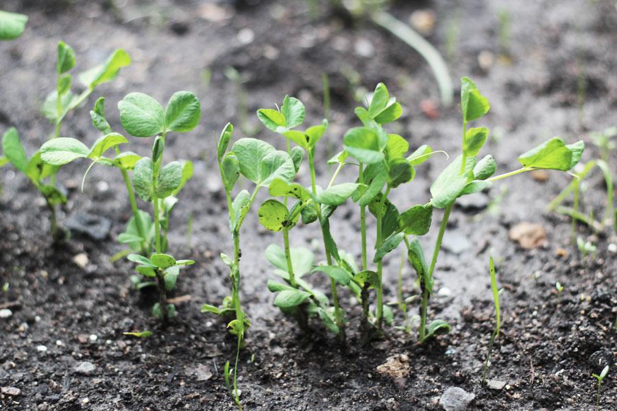 spinach-sauce-pasta1